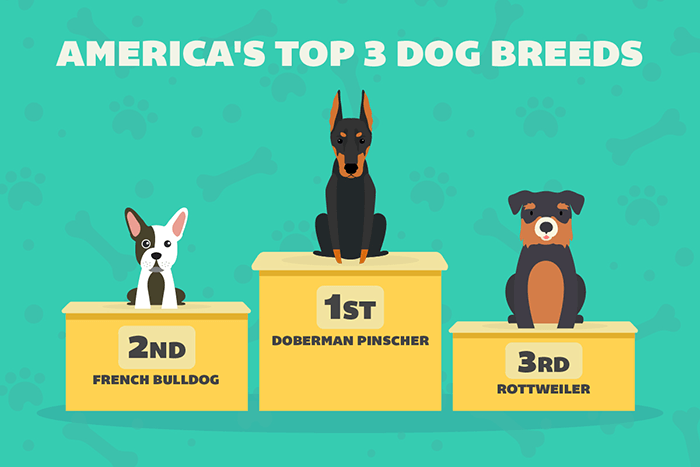 America's Top Three Dog Breeds
